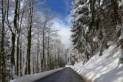 Road through the winter forest (echumachenco) Tags: winter snow december tree forest pine road roadside sky cloud gaisberg salzburg austria österreich outdoor landscape nikond3100 light shadow lines
