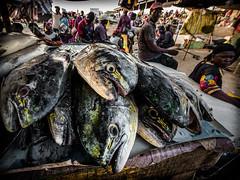 Poisson (Saurí) Tags: poisson peces pescados fish nature naturaleza africa