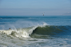 Wave (rmtron) Tags: wave ocean birds seagull portugal europe