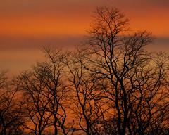 Tree Silhouette (Joan M) Tags: 1192029 silhouette trees sunset outdoor nature fall2019 jasperpulaski in explore