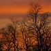 Tree Silhouette (Joan M) Tags: 1192029 silhouette trees sunset outdoor nature fall2019 jasperpulaski in