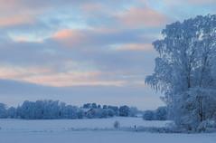While daylight fades... (RdeUppsala) Tags: uppsala uppland landscape landskap paisaje ricardofeinstein campo landet åkrar fields frost escarcha cielo sky himmel moln nubes clouds nieve snow snö trees árboles träd atardecer sunset skymning twilight dusk