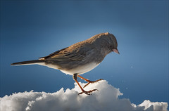Walking on a Cloud (Kathy Macpherson Baca) Tags: bird junco world snow winter december earth planet nature feathers snowbird wildlife