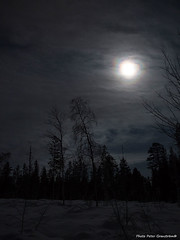 Halo effect! (petergranström) Tags: approved halo effect moon cloud moln sky himmel trees träd snow snö