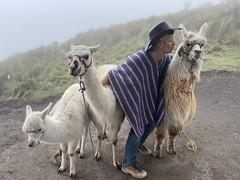 No kisses please at 3,960 meters above sea level, Pichincha Volcano, Quito, Ecuador. (ER's Eyes - Our planet is beautiful.) Tags: llamas animal volcano quito ecuador theandes lama glama camelids lamaglama southamericancamelid diyadventures casacarpedm northvolcaniczone thelongestcontinentalmountainrangeintheworld cordilleraoccidental cordilheiradosandes cordilleraoccidentaldelosandesecuatorianos elmacizodelospichinchas andesmountains summit cume pico cumbrerucopichincha volcánpichincha rukupichincha pichinchavolcano vulcãopichincha anactivestratovolcano easternslopes landscape paisagem vulcão escalar climbingvolcánrucopichincha esporte sport hike climbing quitofromonhigh rucupichincha elrucupichincha quitosskyrail skytram aeriallifts skyrail theteleférico telefériqo thetopofcruzloma equador alpismo palmeiras credicard alpinismo
