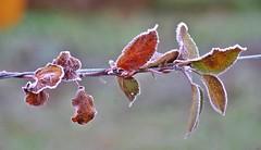 Nature givrée -1- (mamietherese1) Tags: world100f earthmarvels50earthfaves