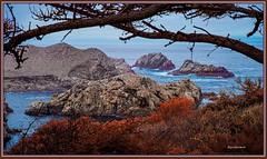 1078. Point Lobos 30 (Oscardaman) Tags: kolariirchromekolarivisionforinquiresaboutanyofmyphotos pleaseemailmeatoscarwitzgmailcom 1078 point lobos 30