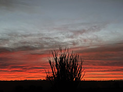 It's Another Tequila Sunrise (oybay©) Tags: arizona suncitywest sunrise sky clouds sun rise color colors colorful ocotillo nature natural morning december silhouette