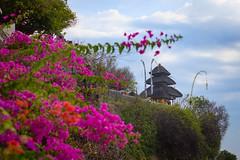 Uluwatu Temple (Strocchi) Tags: cliff klif bali tempiodiuluwatu sea mare waves onde cielo sky clouds nuvole uluwatu temple canon eos6dmk2 24105mm indonesia flower flowers