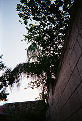 R1-01137-002A (arivallejo1) Tags: film fujifilm fuji disposable portra400