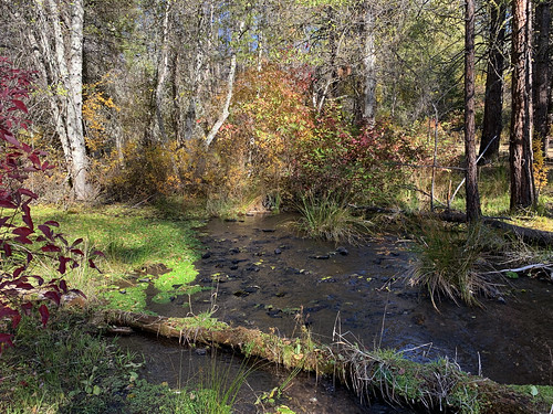 Spring Creek Wild and Scenic River