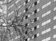 Stark Winter Branches & Skyscraper (Orbmiser) Tags: nikonafpdx70300mmf4563gedvr d500 nikon oregon portland building bw branches