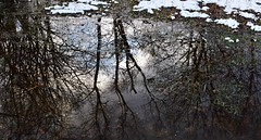 Winter Reflections (Paul Anthony Moore) Tags: reflections
