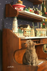"""""""Time for a trip to town!"""" (Judecat (Tis the Season!)) Tags: cat feline dillutetortoiseshell stella christmasvillage decorations holiday christmas"""