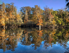 Seasons Changing at the Hillsborough River at Trout Creek (joiseyshowaa) Tags: hillsborough river county pasco water swamp southern oak reflection mirror fall autumn seasons trees leaves red changing blue sky florida fla tropical