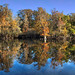 Seasons Changing at the Hillsborough River at Trout Creek