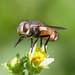 IMGP6670 (redfish1957) Tags: insect nature naturephotography macro pentax dfa100mm