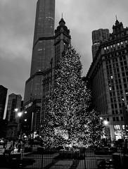 Christmas in Chicago (Kumiko Hoshino) Tags: chicago christmas holiday michiganavenue trumptower