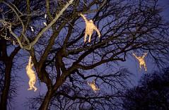 Flying Monkeys (Kumiko Hoshino) Tags: holiday monkeys zoo chicago lighting