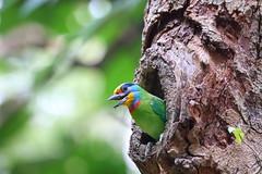哈囉! (mikleyu) Tags: 鳥 動物 自然