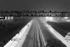 (sharmi_diya06) Tags: street streetphotography streetphot morning birds blackandwhite abstract light letsexplore outside shadows shadow natgeoyourshot natgeophotographer natgeophotographers yourshotnatgeo roadside sky weather people animal man city