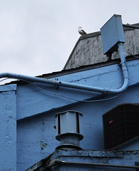 Seagull (monique.m.kreutzer) Tags: bird seagull blue building roof sky