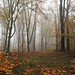 614A4810x_00001 (frans.oost) Tags: dawn sunrise field road mist grass tree forest landscape