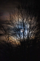 Halo (alasdair massie) Tags: barton sky moon tree home clouds