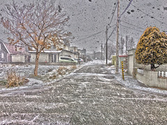 Scene From a Blizzard 3, variant (sjrankin) Tags: 12december2019 edited snow blizzard wind cold road houses roads trees lines wires poles neighborhood hdr