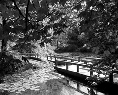 Busch-VanD-HP5-HC110-078 (1) (Dean V L) Tags: bridge pond