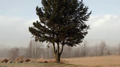 snowy sunshine (Ange 29) Tags: trees snow high wind olympus canada king township omd em1x zd 1435mm