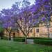 Purple Bloom (Michael Waterhouse Photography) Tags: