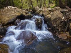 _C060618 (fjsmalaga) Tags: agua rio seda bosque rocas ngc tarifa
