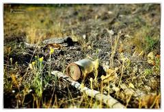 Rusty lid (John Panneman Photography) Tags: lid rustsmoke bushfire smokey sheep jar glass dry heat wombat wombathole hole sun sky williamsdale nsw act australia panneman nikon d610 litter rubbish