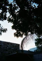 R1-01137-000A (arivallejo1) Tags: film fujifilm fuji disposable portra400
