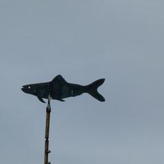 Sea front, Marazion, Penzance (Dave_A_2007) Tags: fish metal nature wildlife marazion cornwall england