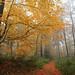 614A4804xx_00001 (frans.oost) Tags: dawn sunrise field road mist grass tree forest landscape