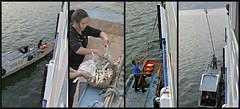 Yangtze Prime? (River Wanderer) Tags: yangtzeriver fish sale fishsellers china
