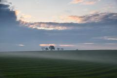 Petite brume sur la campagne (Croc'odile67) Tags: nikon d3300 sigma contemporary 18200dcoshsmc paysage landscape nature brume mist ciel sky nuage cloud arbres trees champ campagne