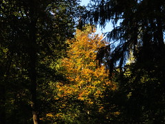 Autumn view (Artist Shaman) Tags: autumn odenwald forest view time home light color