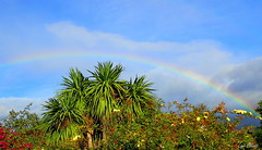 Mountain Rainbow (Lani Elliott) Tags: sky bluesky rainbow rainbowscene scenictasmania view scenic garden moody clouds trees cordyline cabbagetree