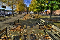 Autumn leaves and benches by the river at Chester (Tony Worrall) Tags: welovethenorth nw northwest north update place location uk visit area attraction open stream tour photohour photooftheday pics country item greatbritain britain british gb capture buy stock sell sale outside dailyphoto outdoors caught photo shoot shot picture captured ilobsterit instragram england leaves golden bench seats riverside sunlit nice beauty fallenleaves chester cheshire lovely shadows lines sit trees urbannature
