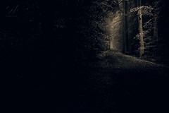 *** (Szymon Wiatr) Tags: polska poland łuszczanowice mysterious tajemniczy las jodła puszcza rezerwat