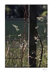 Six Thirty (radspix) Tags: sony ilce 7r 70150mm vivitar kino f38 close focusing zoom