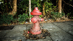 fire plug 306 (steve: they can't all be zingers!!! (primus)) Tags: sonya7rii nikkor24mmf28ais primelens prime primenikkorlens wideangle sony taiwan taichungtaiwan taichung lightroom lightroom6