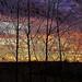 Light (Tobymeg) Tags: light sky altered colour trees stone
