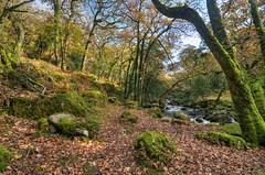 Dewerstone Wood and the River Plym, Dartmoor (Baz Richardson) Tags: devon dartmoor dewerstonewood riverplym nationaltrust woods rivers sssi