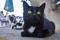 Little Cat (PLawston) Tags: la palma canary islands spain fajana cat kitty