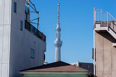 (koyaman3422) Tags: sony a7 24105mm 旧中川