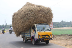Transport, Indian Style (RossCunningham183) Tags: india tamilnadu hay lorry truck haulage overloaded